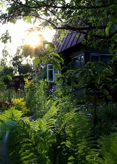 Jardín de verano hierba sol