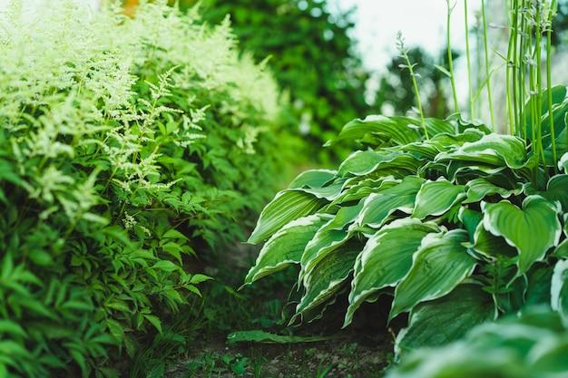 Un jardín verde. perejil