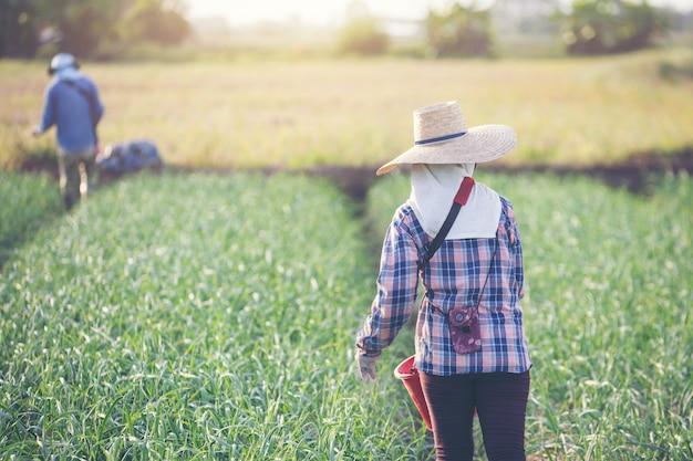 Las jardineras mujeres están fertilizando el jardín de la cebolla.