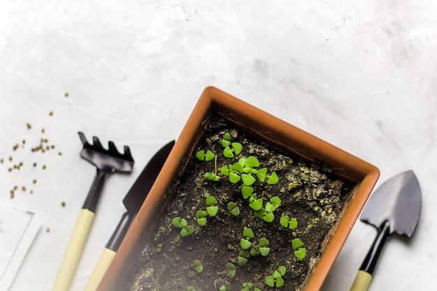 Jardinería casera, brotes de hierbas frescas de albahaca en maceta, herramientas de jardín y empaque de semillas