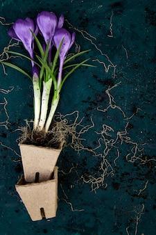 Jardinería. macetas de turba, flor de azafrán y plántulas jóvenes. primavera