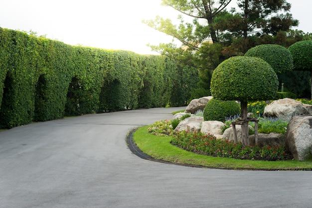 Jardinería y paisajismo con árboles decorativos.