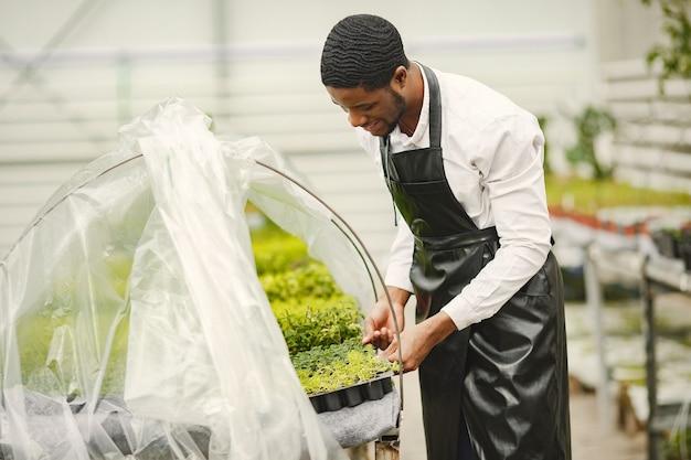 Jardinero en un delantal. chico africano en un invernadero. flores en una maceta.