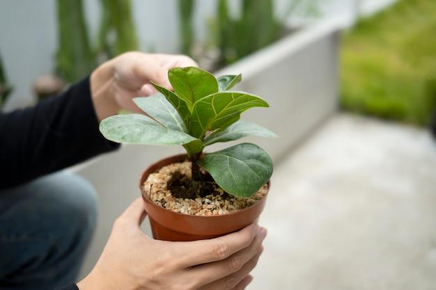 Jardinero de hombre está cuidando plantas de interior.