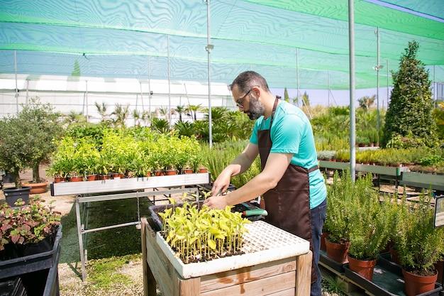 Jardinero macho serio plantando brotes, usando pala y tierra de excavación. copie el espacio. trabajo de jardinería, botánica, concepto de cultivo.