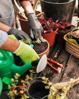 Jardinero masculino y femenino plantando la plántula en la maceta