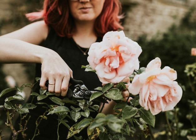 Jardinero mujer cortando rosa rosa con tijeras de jardín