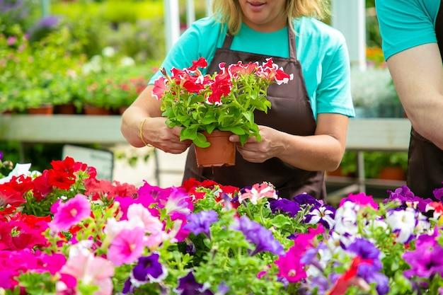 Jardinero mujer irreconocible sosteniendo una olla con bonitas flores. mujer rubia en delantal negro cuidando y controlando las plantas florecientes en invernadero con su colega. actividad de jardinería y concepto de verano.