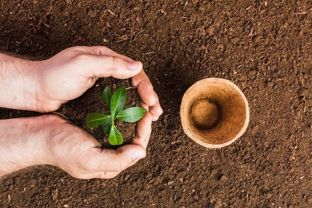 Jardinero plantando visto desde arriba