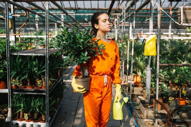 Jardinero de sexo femenino hermoso que sostiene la planta y la regadera en conserva en invernadero