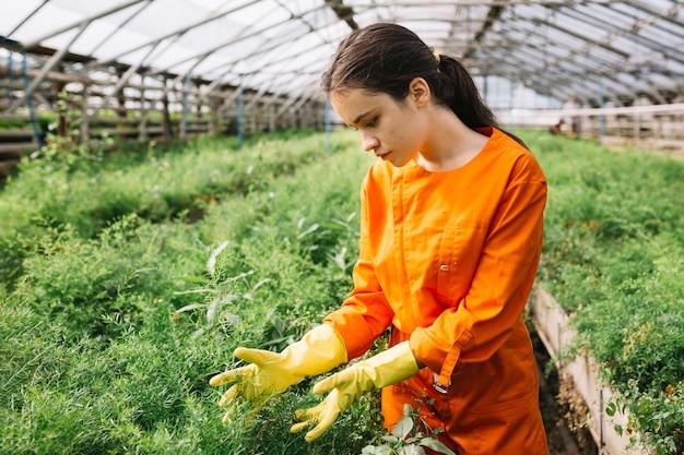 Jardinero de sexo femenino joven que examina las plantas en invernadero
