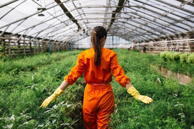 Jardinero de sexo femenino joven que toca las plantas frescas en invernadero