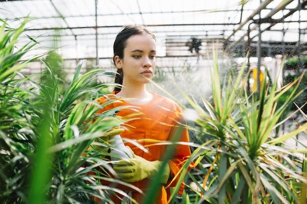 Jardinero de sexo femenino que rocía en la planta en invernadero