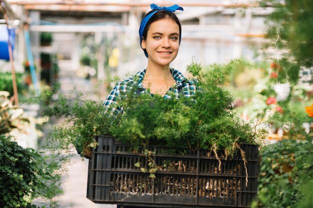 Jardinero de sexo femenino que sostiene el cajón con las plantas en invernadero