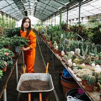 Jardinero de sexo femenino que sostiene la planta en conserva en invernadero