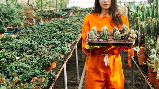 Jardinero de sexo femenino que sostiene las plantas suculentas
