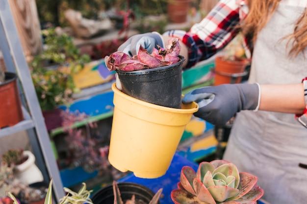 Jardinero de sexo femenino que sostiene los potes florecientes amarillos y negros