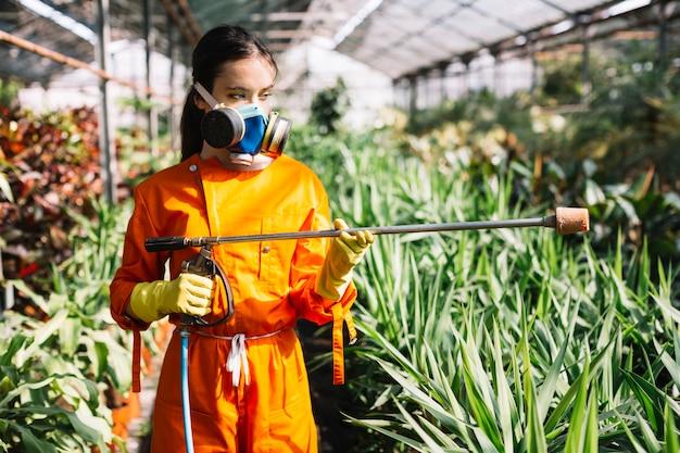 Jardinero de sexo femenino con el rociador que se coloca en invernadero