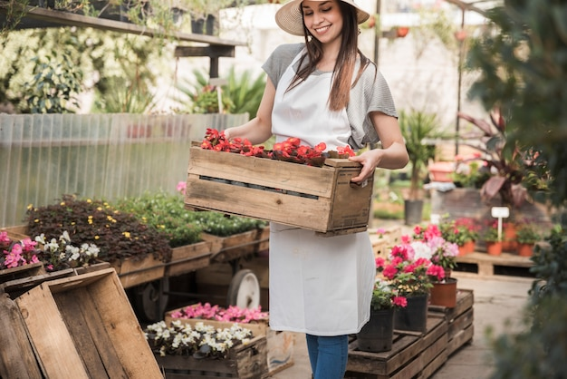 Jardinero de sexo femenino sonriente que sostiene el cajón de flores rojas de la begonia en invernadero