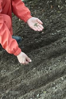 Jardinero siembra semillas en el suelo