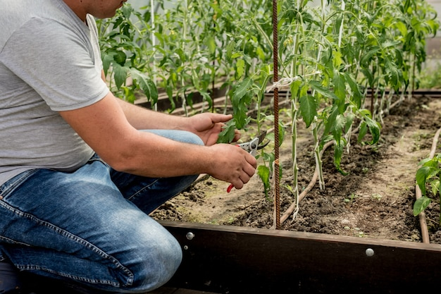 Jardinero trabajando en invernadero
