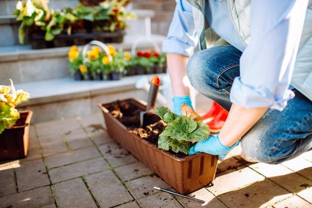 Jardineros manos plantando flores en maceta con tierra o tierra en el patio trasero
