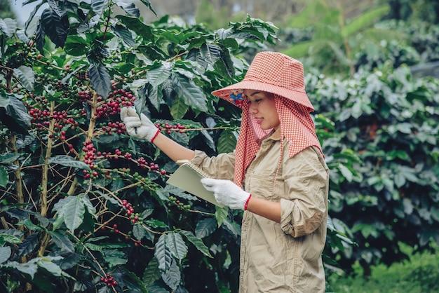 Jardineros que sostienen un cuaderno y están estudiando cafetos, granos de café y cosecha.