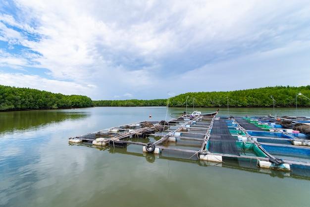 Jaulas de peces en el río y el bosque de manglares en el sur de tailandia.