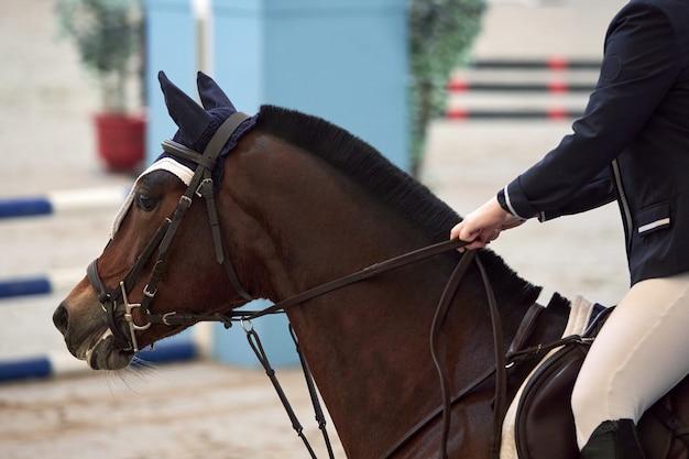 Jinete en un hermoso caballo marrón esperando el comienzo de un espectáculo de salto