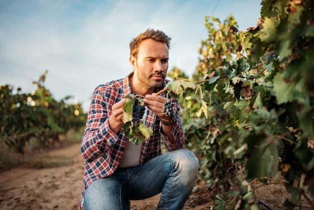 Joven agarrando una uva en un viñedo