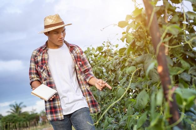 Joven agricultor asiático comprobando su planta o vegetal