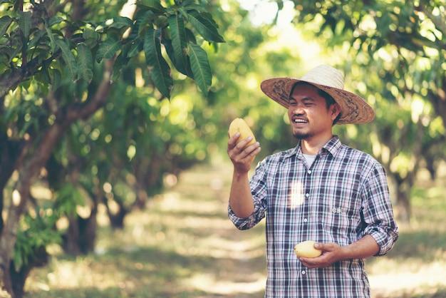 Joven agricultor asiático recogiendo fruta de mango en granja orgánica