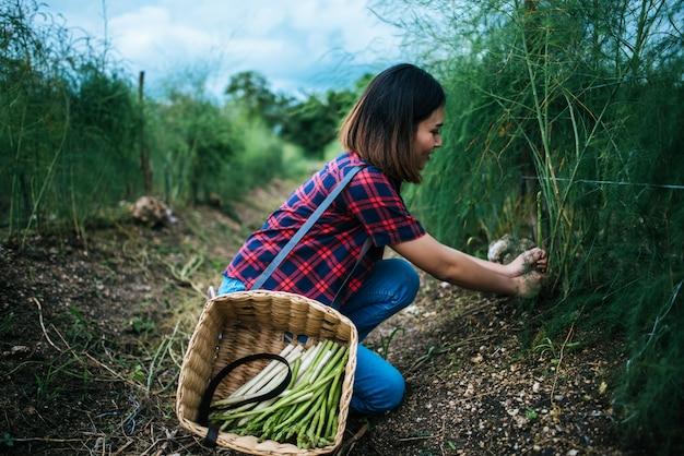 Joven agricultor cosecha espárragos frescos con la mano puesta en la canasta.