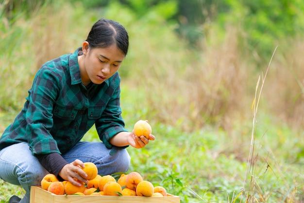 Joven agricultor con melocotones