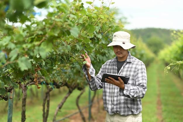 Un joven agricultor está usando una tableta mientras está de pie entre el huerto.