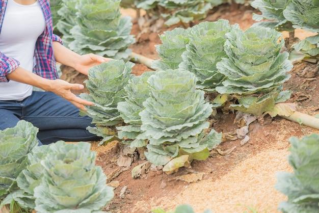 Joven agricultora trabajando en el campo y revisando las plantas de col rizada decorativa.