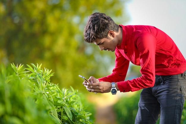 Joven agrónomo indio analizando campo con smartphone