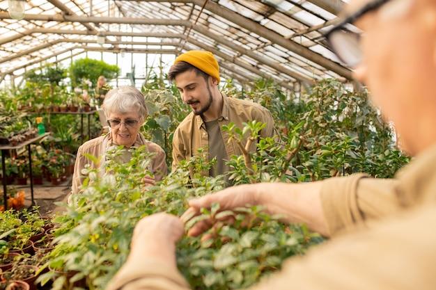 Joven barbudo con gorra preguntando a la abuela sobre jardinería mientras trabaja con ella en invernadero