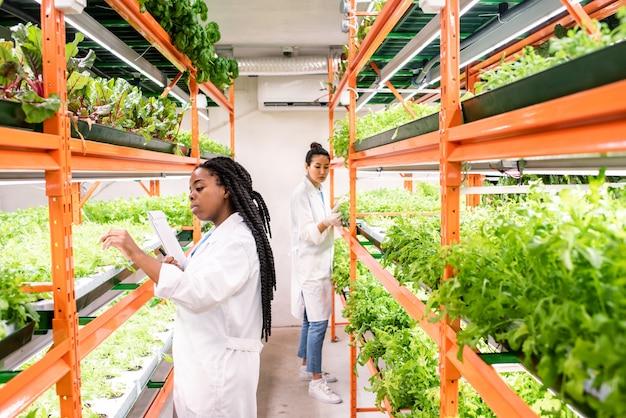 Joven biólogo africano o investigador en bata blanca de pie junto a la estantería con plántulas verdes mientras estudia las plantas