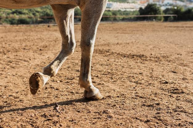 Joven caballo caminando en la granja