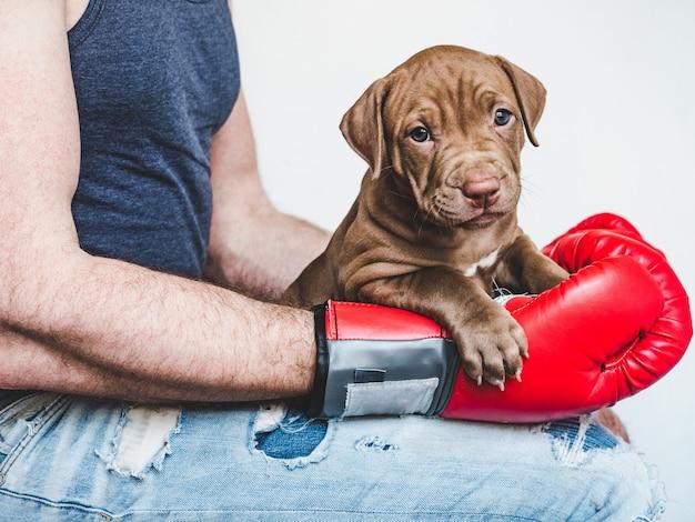 Joven, encantador cachorro y guantes de boxeo rojos.
