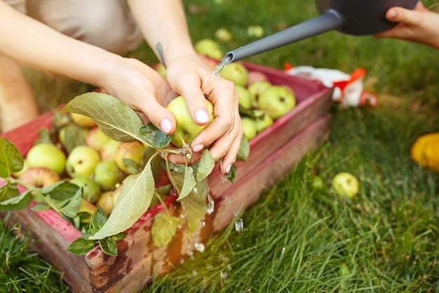 La joven familia feliz durante la recolección de manzanas en un jardín al aire libre