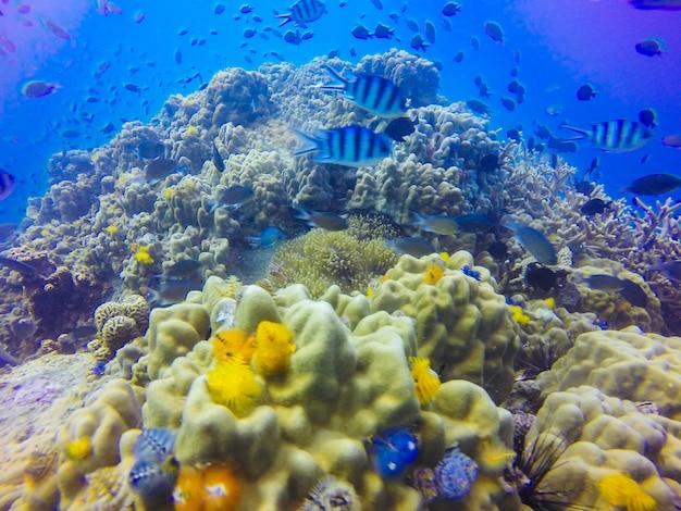 Joven formación de arrecife de coral en el fondo del mar arenoso