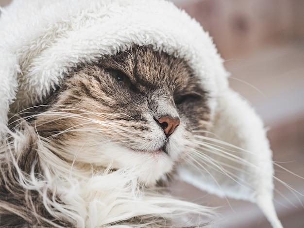 Joven gatito en un gorro de lana blanca