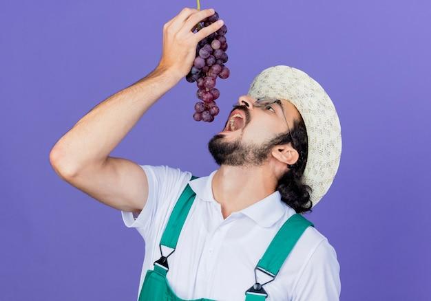 Joven jardinero barbudo hombre vestido con mono y sombrero sosteniendo racimo de uva abriendo la boca va a comer de pie sobre la pared azul