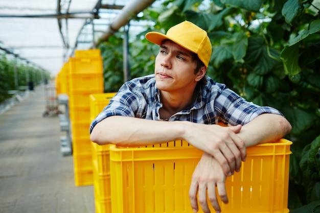 Joven jardinero inclinado sobre la pila de cajas de plástico en invernadero