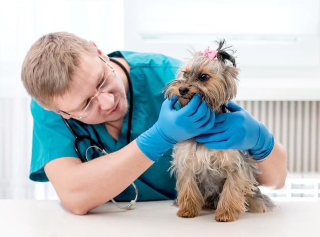 Joven macho mascota médico revisando los dientes del perro