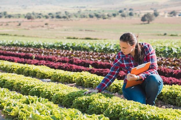 Joven mujer técnica trabajando en un campo de lechugas con una carpeta