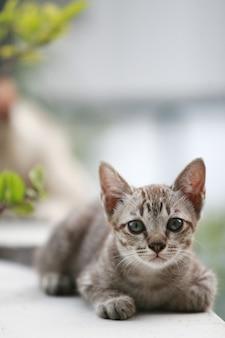 Joven pequeño retrato de gato gris, al aire libre
