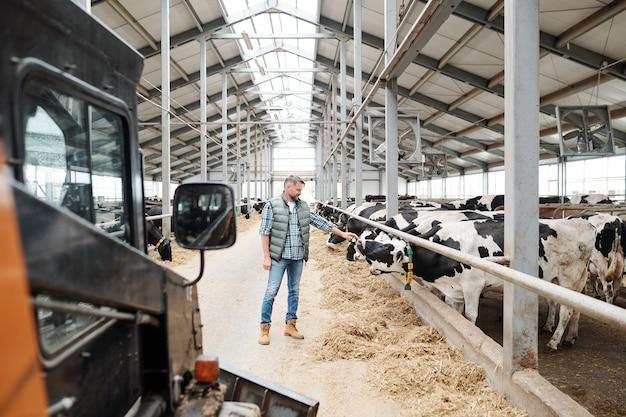 Joven en ropa casual de pie junto a la fila de vacas lecheras y tocando una de ellas mientras trabajaba en la granja